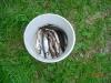 fiskedag-med-fritidsgarden-023